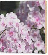 Phlox Paniculata Named Bright Eyes Wood Print