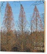 3 Pines Wood Print