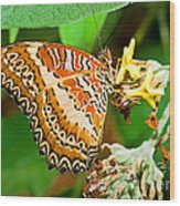 Plain Tiger Butterfly Wood Print