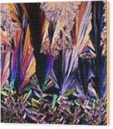 Plm Of Crystals Of Testosterone Wood Print