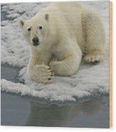 Polar Bear Resting On Ice Wood Print