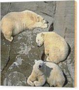 3 Polars Wood Print
