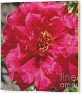 Portulaca Named Sundial Fuchsia Wood Print