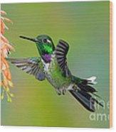 Purple-bibbed Whitetip Hummingbird Wood Print