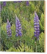 3 Purple Lupine Wood Print