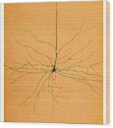 Pyramidal Cell In Cerebral Cortex, Cajal Wood Print