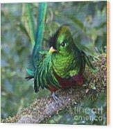 Quetzal Wood Print