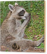 Raccoons Wood Print