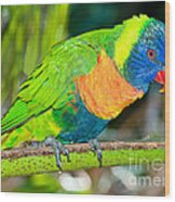 Rainbow Lorikeet Wood Print