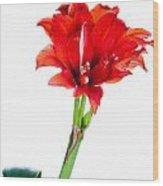 Red Amaryllis Wood Print