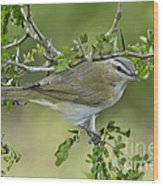 Red-eyed Vireo Wood Print