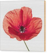Red Poppy Flower Wood Print