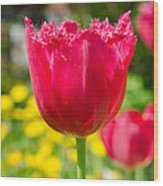Red Tulips On The Green Background Wood Print