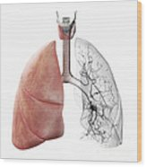 Respiratory System Wood Print