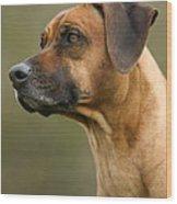 Rhodesian Ridgeback Wood Print