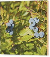 Ripe Maine Low Bush Wild Blueberries Wood Print