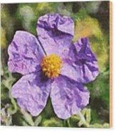 Rockrose Flower Wood Print