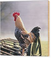 Rooster Wood Print by Hans Reinhard