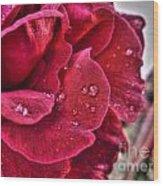 Red Rose And Summer Rain Wood Print
