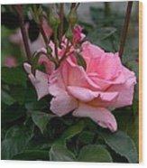 Rose Of Summer Wood Print