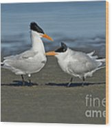 Royal Terns Wood Print