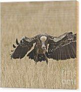 Ruppells Vulture Wood Print
