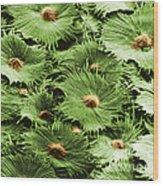 Russian Silverberry Leaf Sem Wood Print