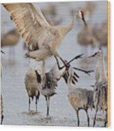 Sandhill Cranes Dancing On The Platte Wood Print