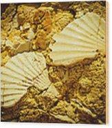 Seashell In Stone Wood Print by Raimond Klavins