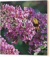 Snowberry Clearwing Hummingbird Moth Wood Print