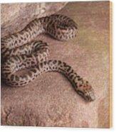 Spotted Python Antaresia Maculosa Wood Print