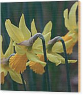 Spring Sunshine Wood Print