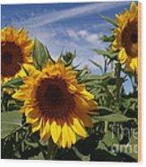 3 Sunflowers Wood Print