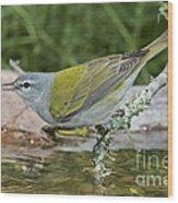 Tennessee Warbler Wood Print