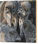 Timber Wolves Wood Print