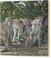 Toque Macaques Wood Print