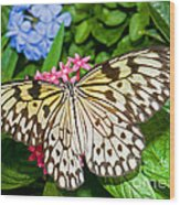 Tree Nymph Butterfly Wood Print