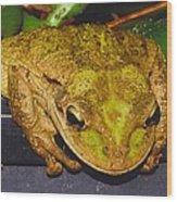 Treefrog Wood Print