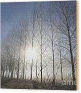 Trees On A Foggy Field Wood Print