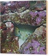 Tropical Fish In Cave Wood Print