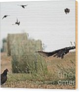 Turkey Vultures Wood Print