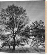 Usa, Tennessee, Great Smoky Mountains Wood Print