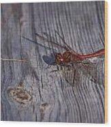 Vagrant Darter Wood Print