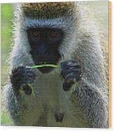 Vervet Monkey Wood Print