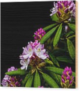 West Virginia State Flower Wood Print