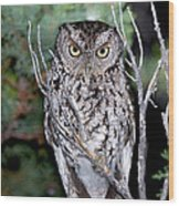 Whiskered Screech Owl Wood Print