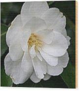 White Camellia Wood Print