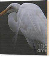 White Heron Portrait Wood Print