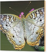 White Peacock Butterfly Wood Print