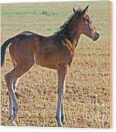 Wild Horse Foal Wood Print
